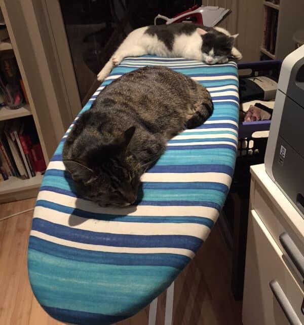 katzen haben es gemuetlich auf dem buegelbrettbezug